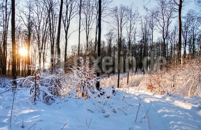 Winter im Eggegebirge