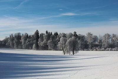 Winterlicher Mischwald