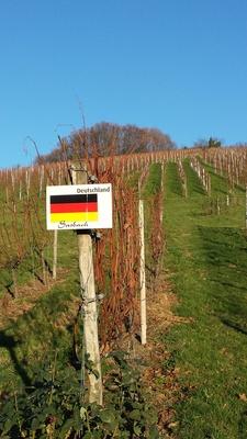 Deutscher Weinberg