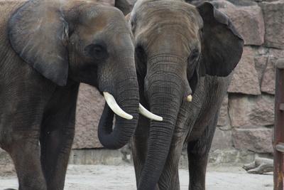 Elefanten im Gespräch!