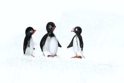 Pingu die Tropfnase