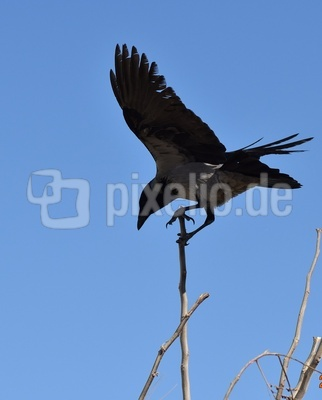 ein magischer Vogel