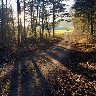 Waldspaziergang Herbstnachmittag