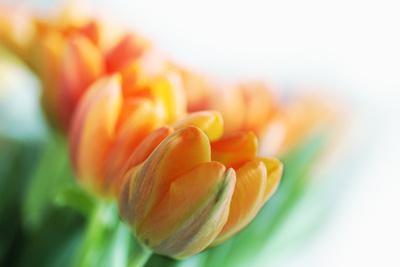 etwas Frühling I