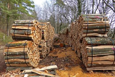 Brennholz aus dem Buchenwald