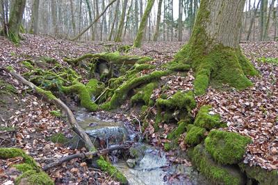 Rinnsal im Blätterwald