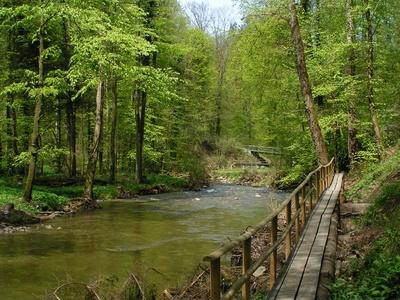 Bach im Frühlingswald