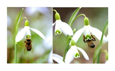 fleißiges Bienchen . . .