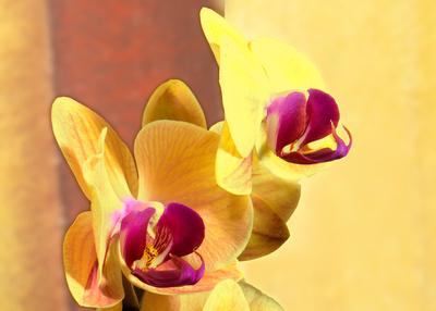 Schönheit in Gelb-Violett