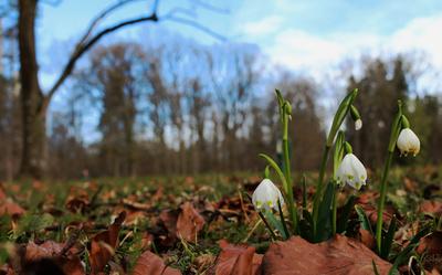 Grüß Gott lieber Frühling