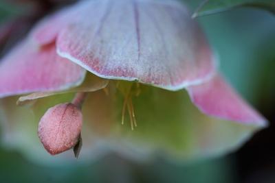 Zarte Blütenphantasie