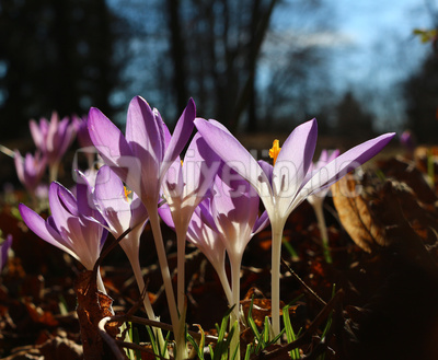 Es leuchte der Frühling 02
