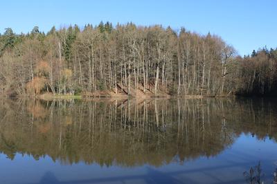 Spiegelwald