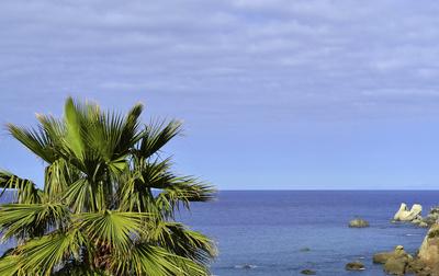 Ischia - Meer mit Palme