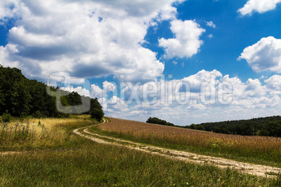 Landschaft im Juli