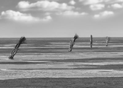 Weg im Wattenmeer