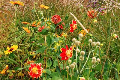Farbtupfer im naturbelassenen Garten