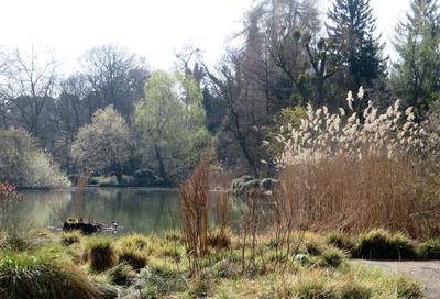 Teichlandschaft im März