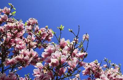 Frühlingsblüten 02