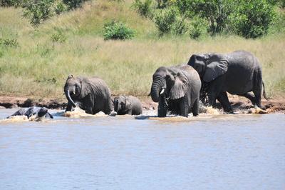 Elefantenfamilie beim Baden