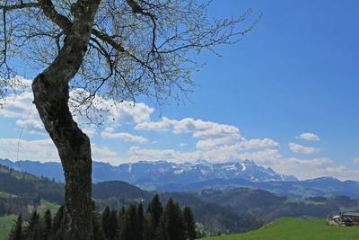 Fernsicht ins Alpsteingebiet