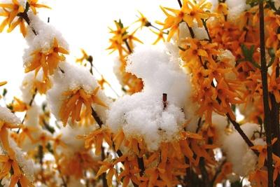 Blüten im Winterkleid
