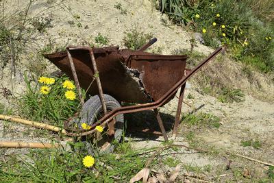 Impressionen aus Ischia - einsame Schubkarre