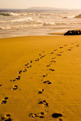 Strandläufer-Spuren
