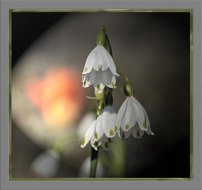 Blumebild gerahmt II