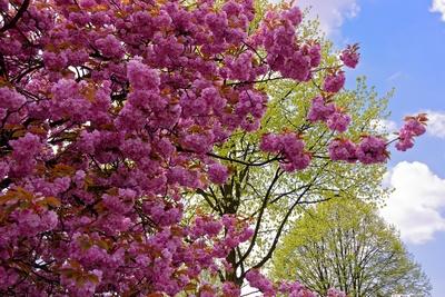 Frühlingsblick