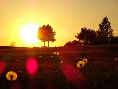 Frühlingswiese im Sonnenuntergang