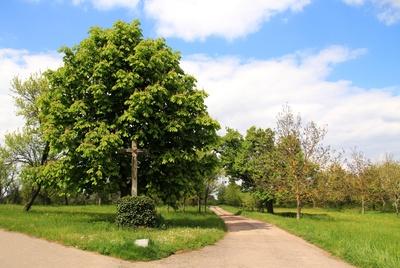 Feldkreuz am Kastanienbaum