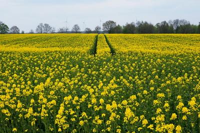 die gelbe welle