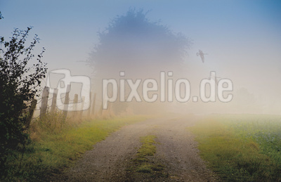 Friedliche Morgenidylle mit Nebel & Gänsen