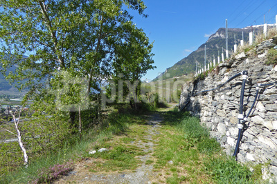 Auf dem Chemin de Vignoble