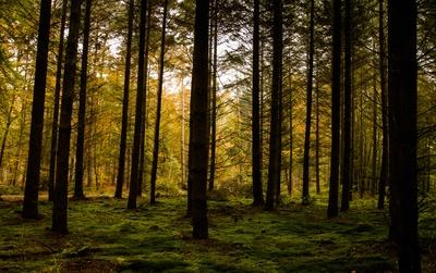 Der Wald die grüne Lunge unserer Erde