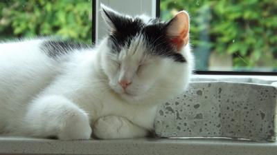 Katze ist müde