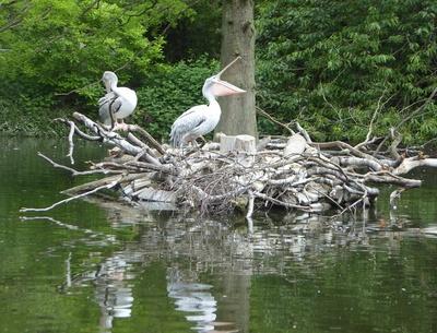 Pelikaninsel