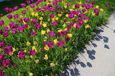 Blumengärten Hirschstetten 02