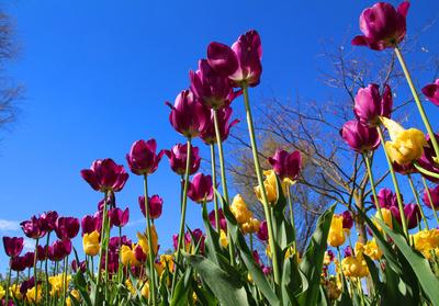 Blumengärten Hirschstetten 03