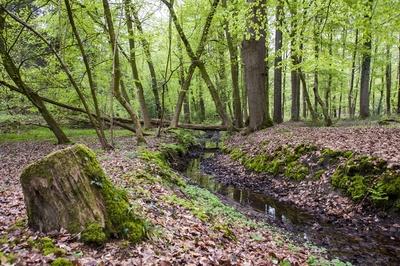 Im Naturwald