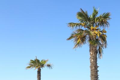 Palmen 5
