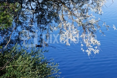 Frühe Sonnenstrahlen am Ufer