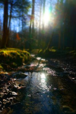 Bachlauf in Wintersonne