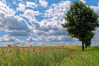 Wolken ziehen überm Feld