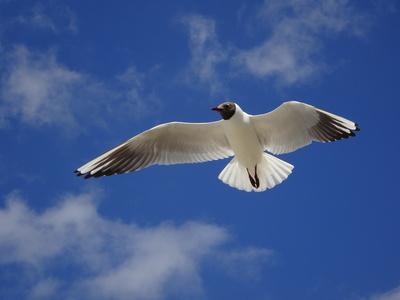 ...wer möchte mitfliegen....