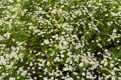 Blüten 436
