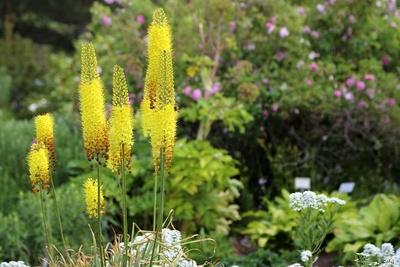 Blüten 440