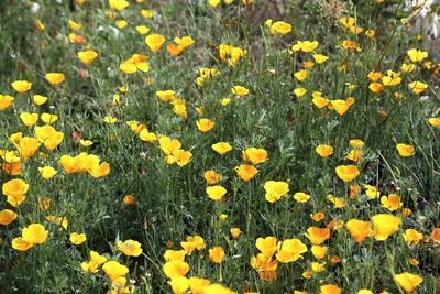 Blüten 442