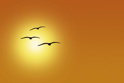 Möwen vor Sonne